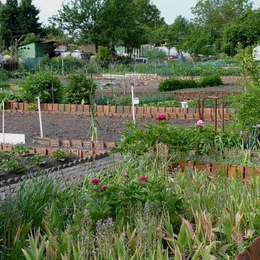 Les jardins familiaux, ces petits paradis populaires